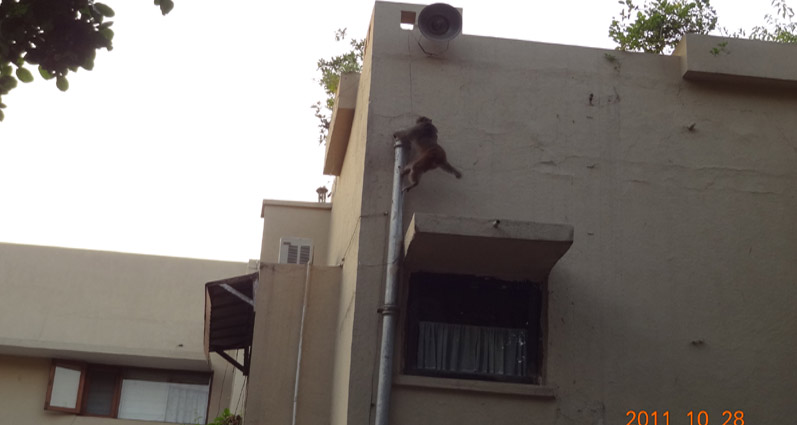 Indolite MonkeyScare Poles and Pipes - Solution for Monkey Menace
